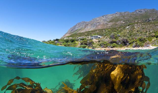 Presseinformation Basfoliar Kelp SL