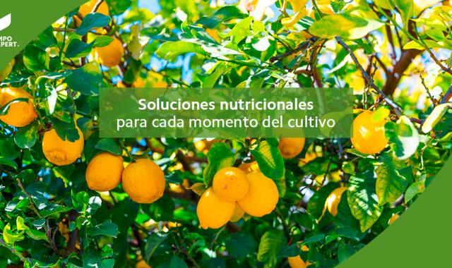 Soluciones Nutricionales