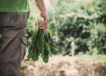 man holding vegetable