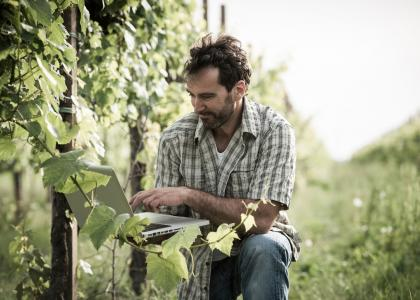 Man in the vineyard, looking at computer