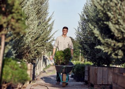 Man drives little tree in the wheelbarrow