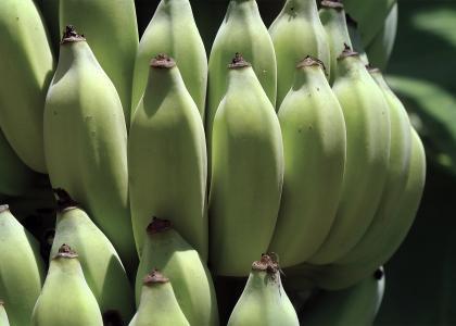 Banana close up